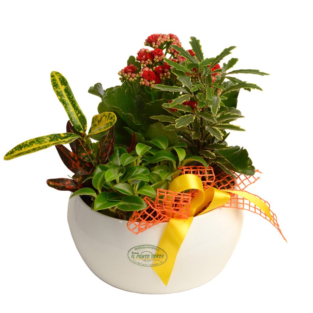 Composizione piante per interni