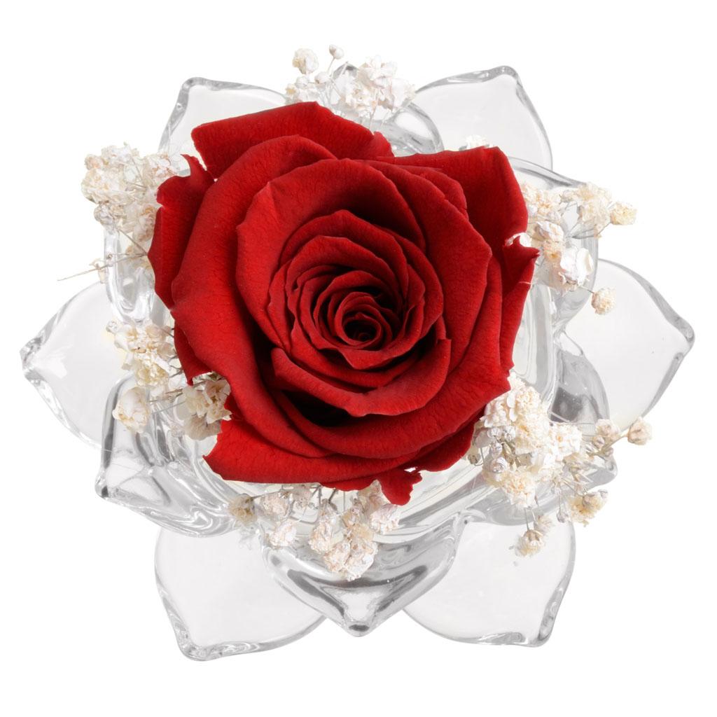 Rosa stabilizzata in rosa di vetro