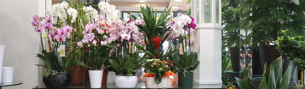 Piante verdi piante fiorite a domicilio.